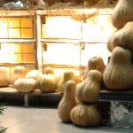 Halloween and Harvest Pumpkin Decor