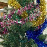 Christmas Trees this Season