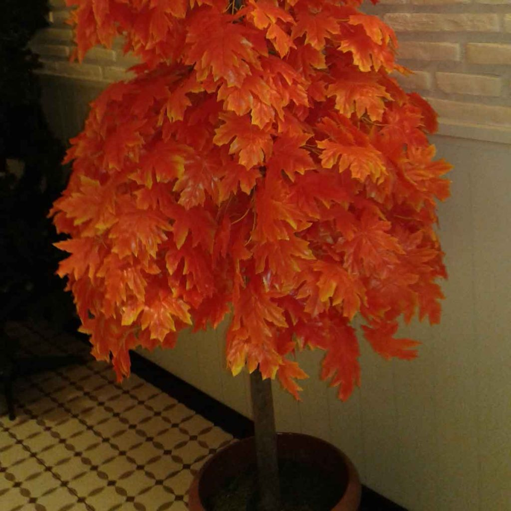 Chinese New Year with Orange Tree